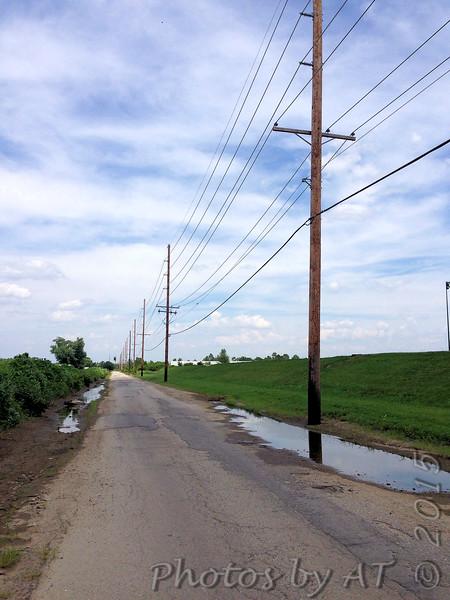 One, possible two on wires along Prouhet Farm Road <br /> Behind Bridgeton Municipal Athletic Complex (BMAC) <br /> Bridgeton, Missouri