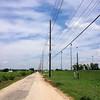 Western Kingbird <br /> One, possible two on wires along Prouhet Farm Road <br /> Behind Bridgeton Municipal Athletic Complex (BMAC) <br /> Bridgeton, Missouri