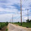 Spotted another 2-3 poles farther down  <br /> Prouhet Farm Road <br /> Behind Bridgeton Municipal Athletic Complex (BMAC) <br /> Bridgeton, Missouri