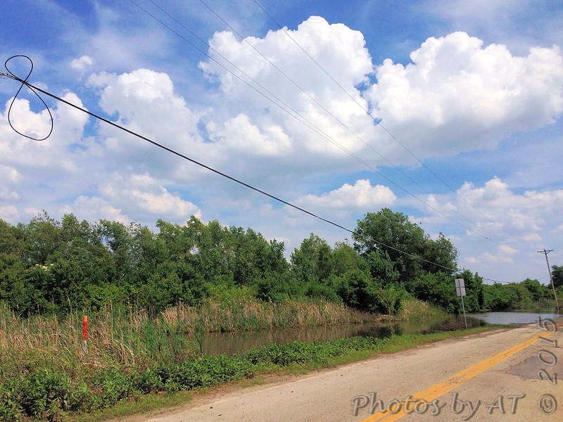 Western Kingbird first seen on wires at left <br /> Ferguson Lane <br /> West end of flooded area <br /> Bridgeton