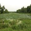 Creve Coeur Marsh <br /> 6/30/15