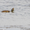 Heron Pond  <br /> Riverlands Migratory Bird Sanctuary<br /> 2015-05-24