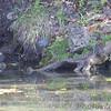 Green Heron <br /> Along path to spring <br /> Ha Ha Tonka State Park