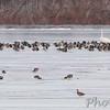 Upper Ellis Bay <br /> Riverlands Migratory Bird Sanctuary
