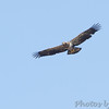 Bald Eagles <br /> Duck Creek Conservation Area