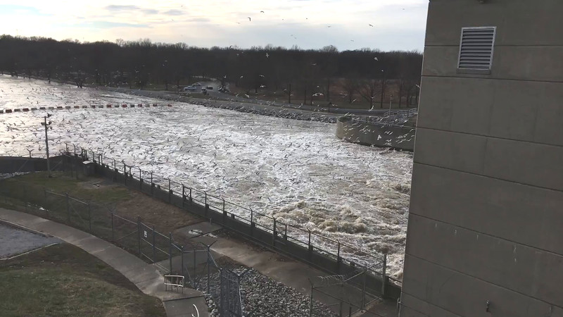 """Gulls below dam <br> Carlyle Lake, Illinois<br> 2016-01-11 <br><br>  <span class=""""noShowSmart""""> <a href=""""/MyKeywords/Bird-Videos/n-gF9bt/i-3cJsvVq/A""""> <span style=""""color:yellow"""">Click here to open video in lightbox/full screen</span></a> </span>  <span class=""""noShowGallery""""> <a href=""""/Birds/2016-Birding/Birding-2016-January/2016-01-11-Black-tailed-Gull/i-3cJsvVq/A""""> <span style=""""color:yellow"""">Click here to open video in lightbox/full screen</span></a> </span>"""