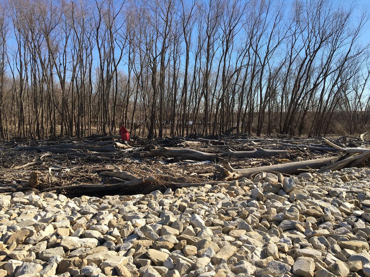 Rock Wren location <br /> Maple Island Road <br /> Riverlands Migratory Bird Sanctuary