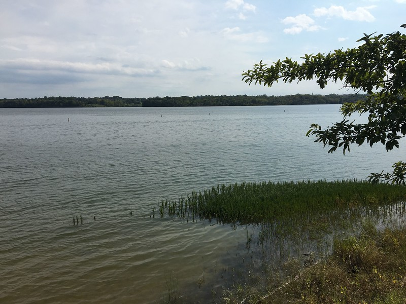 This was shot from marker (see photo one map) on NE point of Point #14<br /> Sabine's Gull out there near buoys <br /> Longview Lake south of Kansas City