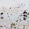 "White-faced Ibis <br> Squaw Creek National Wildlife Refuge <br> 2016-09-21 <br><br>  <span class=""noShowSmart""> <a href=""/MyKeywords/Bird-Videos/n-gF9bt/i-PkRNLPK/A""> <span style=""color:yellow"">Click here to open video in lightbox/full screen</span></a> </span>  <span class=""noShowGallery""> <a href=""/Birds/2016-Birding/Birding-2016-September/2016-09-20-21-SCNWR/i-PkRNLPK/A""> <span style=""color:yellow"">Click here to open video in lightbox/full screen</span></a> </span>"