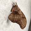 Polyphemus moth <br /> Quick stop at headquarters for restrooms <br /> Duck Creek Conservation Area