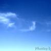 Some kind of bird fly by?<br /> Mingo National Wildlife Refuge