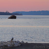 Snowy Owl <br /> South boat ramp Lincoln Shields Area <br /> Riverlands Migratory Bird Sanctuary