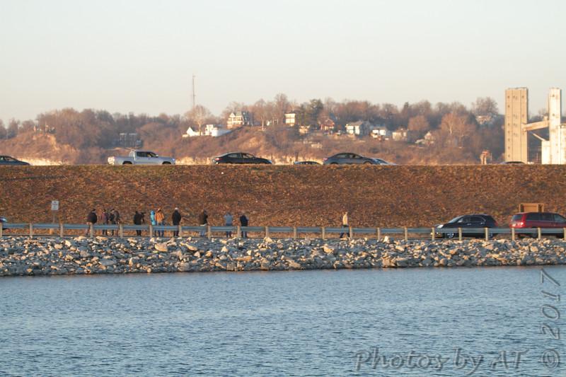 Viewing Snowy Owl <br /> Riverlands Migratory Bird Sanctuary