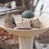 Mourning Doves enjoying no  <br /> water in the headed bird bath <br /> 16° F  Wind: 11.185 mph<br /> Bridgeton, MO <br /> 2017-12-30