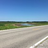 Across the Hwy, west, from were White Ibis was seen. <br /> Off Hwy 3 <br /> Grand Tower <br /> Jackson County, Illinois