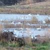 Heron Pond<br /> Riverlands Migratory Bird Sanctuary