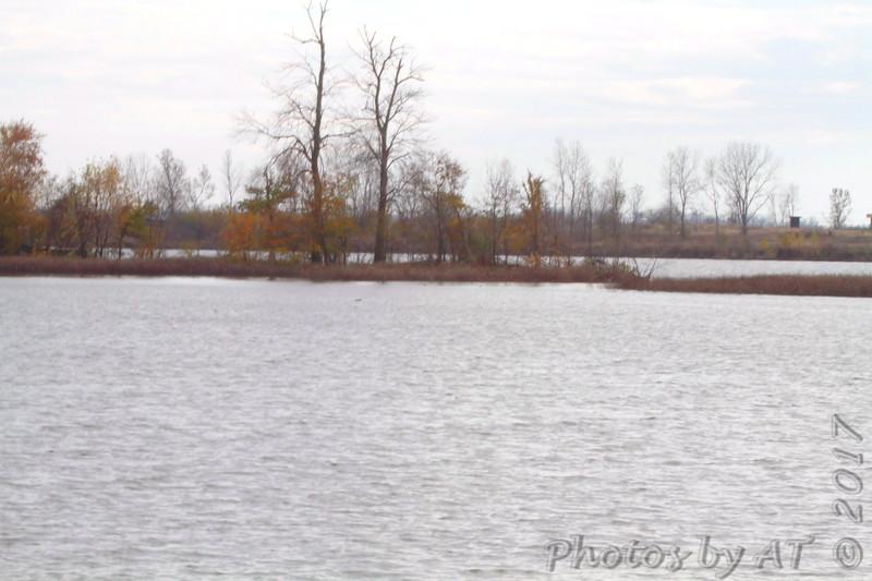 Far end of Ellis Island lagoon <br /> Riverlands Migratory Bird Sanctuary