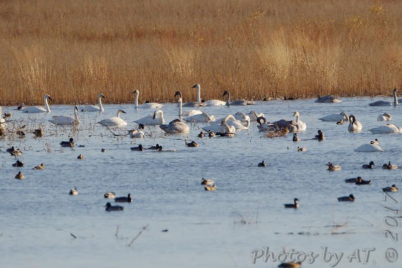 Heron Pond <br /> Riverlands Migratory Bird Sanctuary