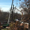 They are removing the giant oak that all the birds <br /> at my feeders go to when spooked.