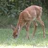 Castlewood State Park <br /> 09/05/17