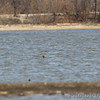 This will give you an idea of how far out the Red-throated Loon was.<br /> Tiny white speck in center of photo. <br /> Ellis Bay <br /> Riverlands Migratory Bird Sanctuary