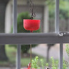 Ruby-throated Hummingbird <br /> Bridgeton, MO <br /> 2018-08-24