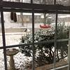 Front yard feeders <br /> Bridgeton,Mo <br /> 2018-12-04