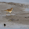Killdeer <br /> Sandy Slough <br /> Winfield Dam