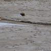 2 of 9 Killdeer <br /> Sandy Slough <br /> Winfield Dam