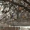 Backyard feeders  <br /> Bridgeton, Mo<br /> 2018-01-16