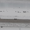 """Double Crested Cormorants <br> Ellis Bay <br> Riverlands Migratory Bird Sanctuary <br> 2018-03-28 3:28:57 <br>  <span class=""""noShowSmart""""> <a href=""""/MyKeywords/Bird-Videos/n-gF9bt/i-bqqq3L8/A""""> <span style=""""color:yellow"""">Click here to open video in lightbox/full screen</span></a> </span>  <span class=""""noShowGallery""""> <a href=""""/Birds/2018-Birding/Birding-2018-March/2018-03-28-Riverlands-Migratory-Bird-Sanctuary/i-bqqq3L8/A""""> <span style=""""color:yellow"""">Click here to open video in lightbox/full screen</span></a> </span>"""