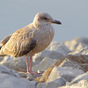 Teal Pond <br /> Riverlands Migratory Bird Sanctuary
