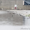 Spillway <br /> Lower Ellis Bay <br /> Riverlands Migratory Bird Sanctuary