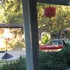 Ruby-throated Hummingbird <br /> Visiting front window feeder <br /> Bridgeton, MO <br /> 2018-10-28 17:15:50