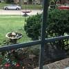 Front yard <br /> Bridgeton, Mo. <br /> 2018-10-07