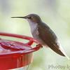 Ruby-throated Hummingbird <br /> Visiting front window feeder <br /> Bridgeton, MO <br /> 2018-10-29 11:02:45