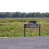 Turkey Vulture <br /> Heron Pond parking lot <br /> Riverlands Migratory Bird Sanctuary