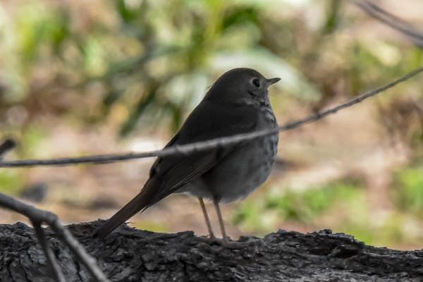 2018 San Diego  Bird Festival