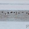 Mid Ellis Bay <br /> Riverlands Migratory Bird Sanctuary