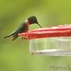 Ruby-throated Hummingbird <br /> Front yard feeder <br /> Bridgeton, Mo.<br /> 2019-04-28