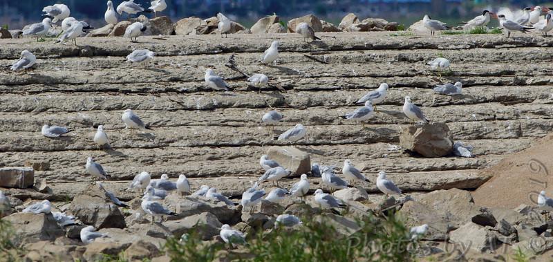 Ellis Bay <br /> Dam Spillway <br /> Riverlands Migratory Bird Sanctuary