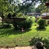 Four hummer feeders in backyard <br /> Bridgeton, Mo. <br /> St. Louis County, Missouri <br /> 8/18/18