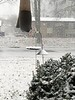 """""""It's snowing!""""<span class=""""spacer_LB_caption""""> • </span> <br> Carolina Wren just crossed this window sill <span class=""""spacer_LB_caption""""> • </span> <br> Front yard feeders <span class=""""spacer_LB_caption""""> • </span> <br> City of Bridgeton <span class=""""spacer_LB_caption""""> • </span>  <br> St. Louis County, Missouri   <span class=""""spacer_LB_caption""""> • </span> <br> 2019-12-15"""
