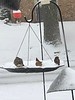 """Front yard feeders <span class=""""spacer_LB_caption""""> • </span> <br> City of Bridgeton <span class=""""spacer_LB_caption""""> • </span>  <br> St. Louis County, Missouri   <span class=""""spacer_LB_caption""""> • </span> <br> 2019-12-16"""