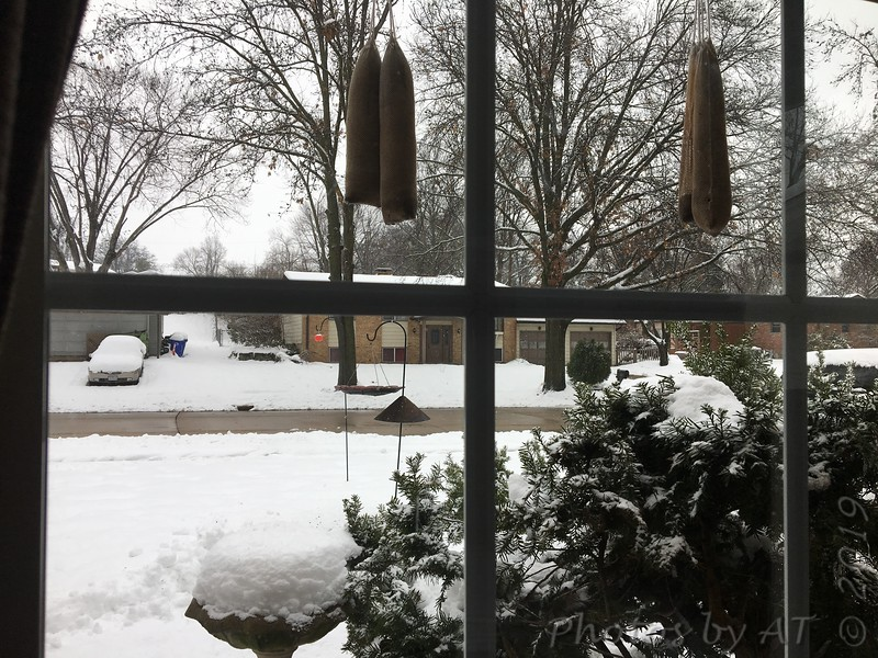 "Front yard feeders  <span class=""spacer_LB_caption""> • </span> <br> Bridgeton,Mo  <span class=""spacer_LB_caption""> • </span> <br> 11.4 inches for this storm  <span class=""spacer_LB_caption""> • </span> <br> 2019-01-12/13"