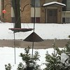 "Front yard feeder   <span class=""spacer_LB_caption""> • </span> <br> Bridgeton,Mo  <span class=""spacer_LB_caption""> • </span> <br> 11.4 inches for this storm  <span class=""spacer_LB_caption""> • </span> <br> 2019-01-12/13"