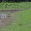 """Sandhill Cranes <br> Firma Road <br> St. Charles County, MO <br>  <span class=""""noShowSmart""""> <a href=""""/MyKeywords/Bird-Videos/n-gF9bt/i-QFwz4w2/A""""> <span style=""""color:yellow"""">Click here to open video in lightbox (full screen)</span></a> </span>  <span class=""""noShowGallery""""> <a href=""""/Birds/2019-Birding/Birding-2019-July/2019-07-31-Firma-and-Dalbow-Roads/i-QFwz4w2/A""""> <span style=""""color:yellow"""">Click here to open video in lightbox (full screen)</span></a> </span>"""