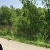 "Hwy 67 between Lewis Bridge and Clark Bridges <br> Stopping at Riverlands Migratory Bird Sanctuary which is closed <br> St. Charles County  <br> 2019-06-01 13:53:47-05:00 <br>  <span class=""noShowSmart""> <a href=""/MyKeywords/Bird-Videos/n-gF9bt/i-8SrdWcL/A""> <span style=""color:yellow"">Click here to open video in lightbox/full screen</span></a> </span>  <span class=""noShowGallery""> <a href=""/Birds/2019-Birding/Birding-2019-June/2019-06-01-Riverlands-Migratory-Bird-Sanctuary/i-8SrdWcL/A""> <span style=""color:yellow"">Click here to open video in lightbox/full screen</span></a> </span>"