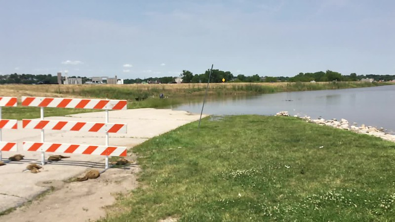 """Riverlands Way across from gas station <br> Looking towards flooded Ellis Island Parking Lot <br> Riverlands Migratory Bird Sanctuary <br> St. Charles County  <br> 2019-06-01 13:58:25-05:00 <br>  <span class=""""noShowSmart""""> <a href=""""/MyKeywords/Bird-Videos/n-gF9bt/i-vpPG436/A""""> <span style=""""color:yellow"""">Click here to open video in lightbox/full screen</span></a> </span>  <span class=""""noShowGallery""""> <a href=""""/Birds/2019-Birding/Birding-2019-June/2019-06-01-Riverlands-Migratory-Bird-Sanctuary/i-vpPG436/A""""> <span style=""""color:yellow"""">Click here to open video in lightbox/full screen</span></a> </span>"""