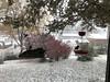 "It's snowing!  <span class=""spacer_LB_caption""> • </span> <br> Backyard feeders  <span class=""spacer_LB_caption""> • </span> <br> Bridgeton, St. Louis County, Missouri  <span class=""spacer_LB_caption""> • </span> <br> 2019-11-11"